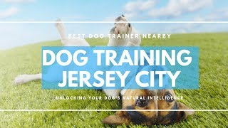 Dog Training Jersey City NJ