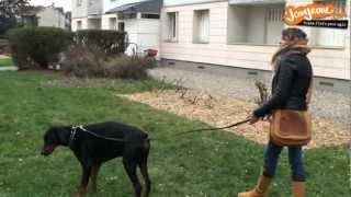 Job étudiant : dog sitter
