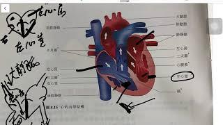 Publication Date: 2019-12-08 | Video Title: 天主教培聖中學 生物科 F4 第生物科第八章教學片(part