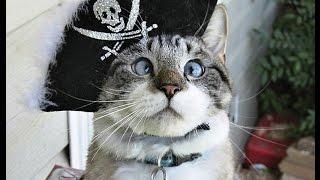Кошки разбойники 5 часть. Пахнет подставой! Октябрь 2016