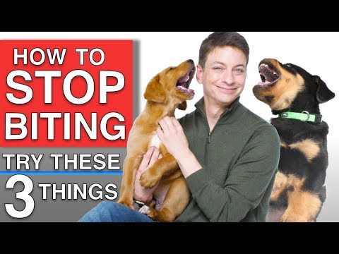 how-to-train-your-puppy-to-stop-biting-you!-3-things-that-will-work!