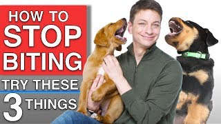 How To Train Your Puppy to STOP BITING You! 3 Things That WILL Work!