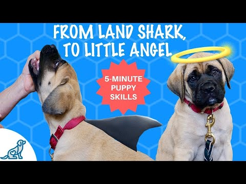 how-to-train-a-puppy-not-to-bite-your-hands---hand-feed-your-puppy-in-5-minutes-or-less