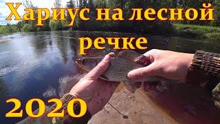 Хариус на лесной реке Рыбалка в Ленинградской области 2020г