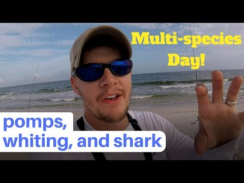 Catching Whiting, Pompano, And Shark