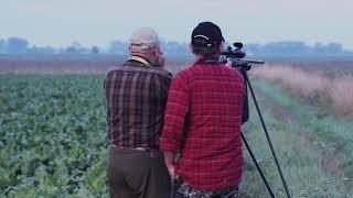 Bukkejagt i Polen / Roebuck hunting in Poland