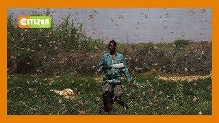 Shilingi bilionI 7 zahitajika kudhibiti Nzige Afrika Mashariki