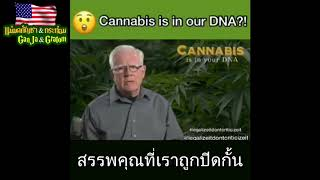 Cannabis is in our DNA - TH SUB (1/2)