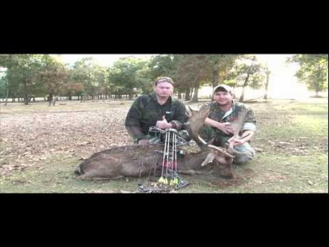 Bow Hunting Fallow Deer With South Coast Safaris