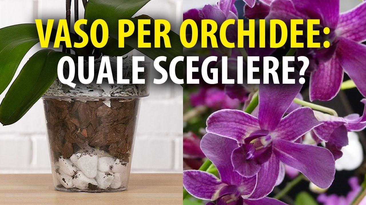 Vasi per orchidee quale scegliere youtube for Vasi per orchidee