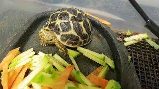 옥탑방에 사는 별거북 옥별이(Star Tortoise)…
