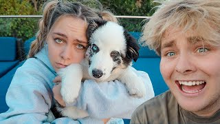 GIVING AWAY GIRLFRIEND'S PUPPY!! (PRANK)