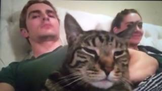 dave franco alison brie cat dancing