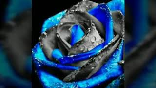 Akhiyan de kol teri (Happy raikoti) New song 😥😥