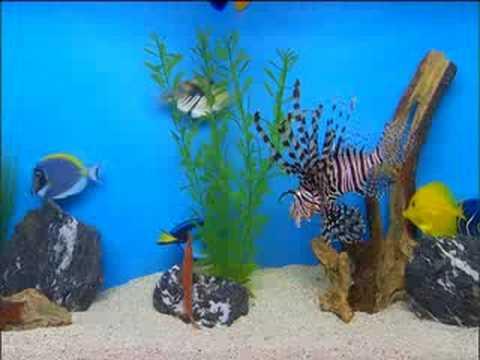 ± Free Streaming The Aquarium DVD Vol. 2