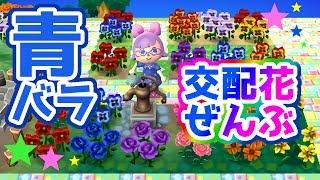 【とび森実況】お花の交配講座#2【青バラ含め全交配花紹介します】