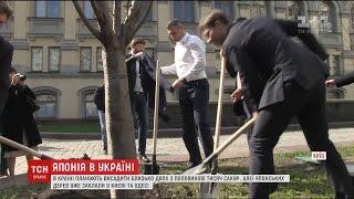 Україну засадять японськими сакурами