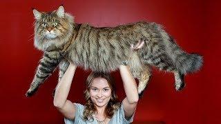 Топ 10 изумителни факта за котките