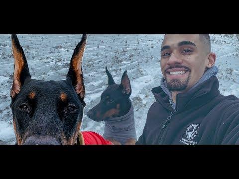 Doberman On Ice | Derek554 Daily Vlog