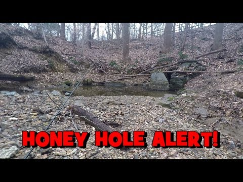 I Found A HONEY HOLE...IN DELAWARE State!