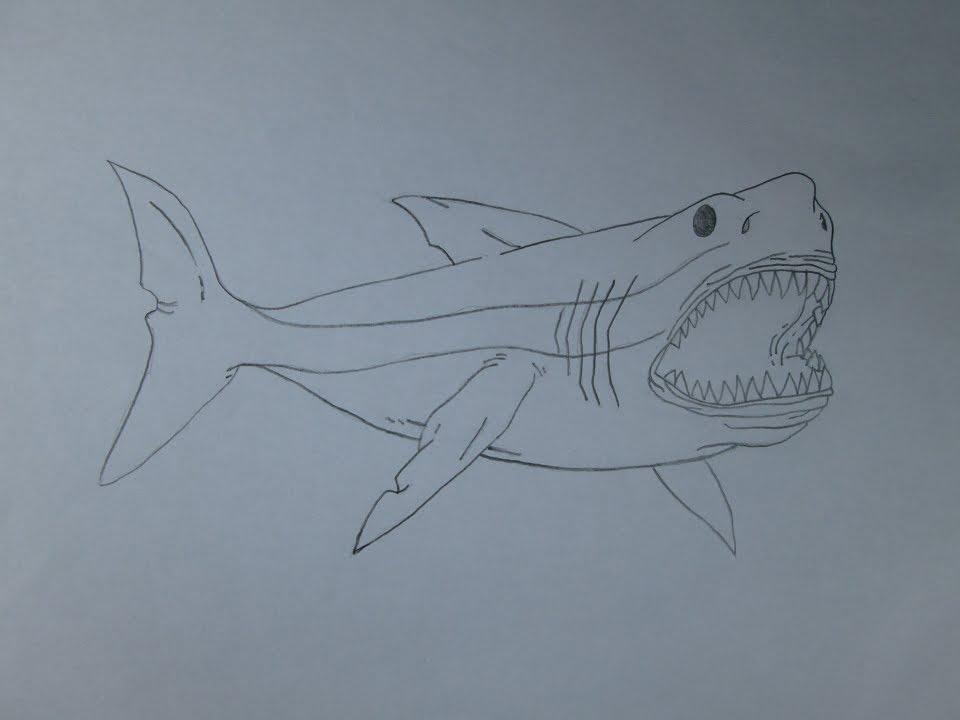 Cómo dibujar un tiburón blanco gigante (megalodon) - YouTube