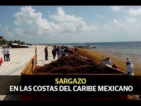 El sargazo invade al caribe mexicano