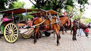 Kuda Delman Lagu Anak ❤ Naik Delman Istimewa