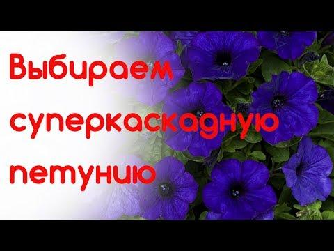 Цветик-семицветик маленький.  Суперкаскадные петунии