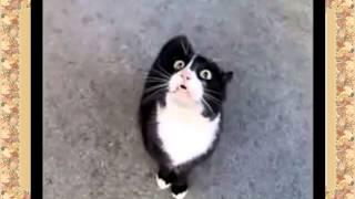 От этого кота Реально выступают слёзы на глазах !!! Смех не ре аль ный