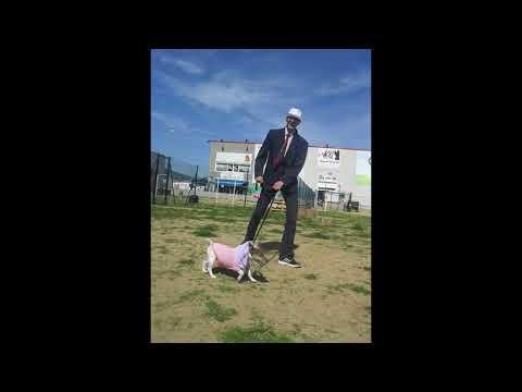 Carnaval Canino y Gymkama en Animals Brunyola
