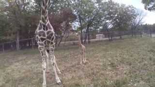 Six Flags Great Adventure Welcomes Baby Giraffe Mika to Safari Off Road Adventure