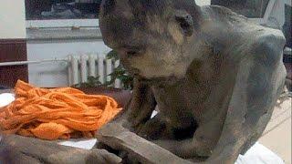 Mummified 200 Yr Old Monk Isn't DEAD - In Deep Meditation