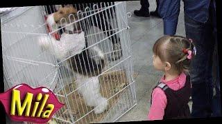 Выставка СОБАКИ Всех Пород 🐕 Выступление Дрессированных Собак 🐶 Идем Смотреть Породистых Собачек 🐩