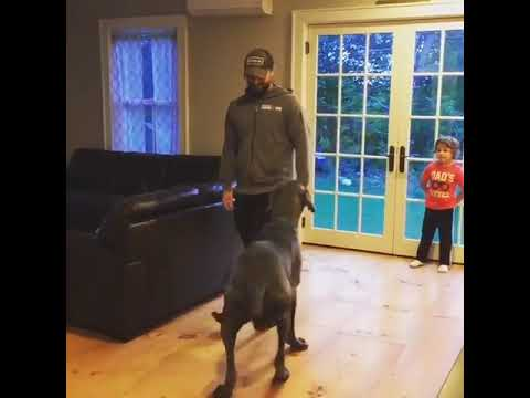 Dan & Shelby - VIRAL VIDEO: Great Dane does lunges with his owner