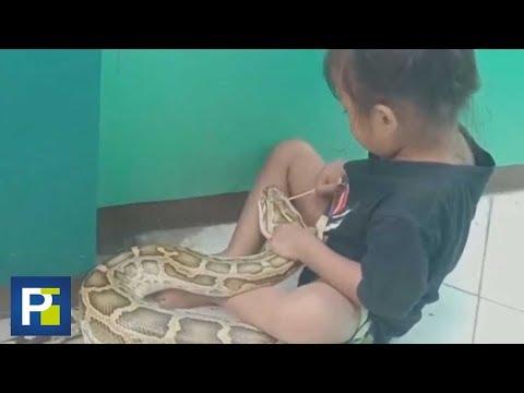 Super Martinez - Niña de 3 Años Juega con una Serpiente