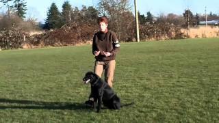 Dumbell Retrieve, Obedience Heeling, Janice Gunn & Mighty