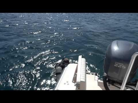 Diving in Bonaire, Dutch Caribbean, Netherlands Antilles
