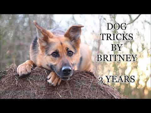 Dog tricks by britney dog  2019