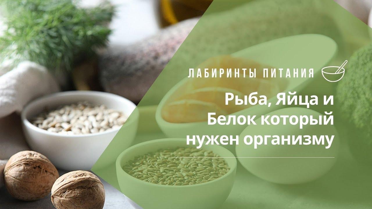 Рыба, Яйца и Белок который нужен организму - Лабиринты Питания