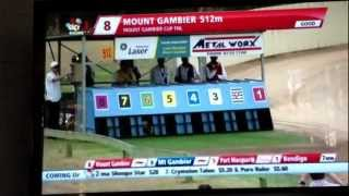 Mount Gambier Cup 2013 Greyhounds Winner Colville Box 1 Trained By Allen Williams.