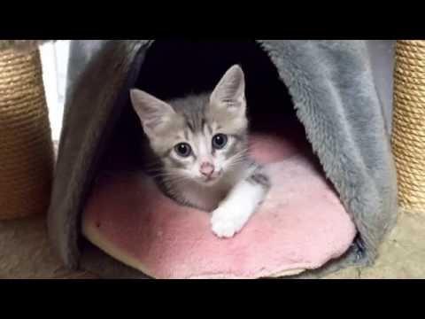 先輩猫にフルボッコにされる捨て子猫