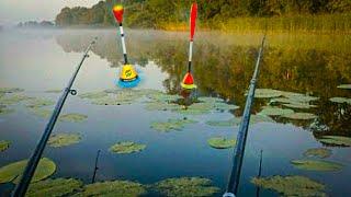 ПОПЛАВОК в ЛИЛИЯХ и КАРП Рыбалка для души Ловля карпа на удочку рыбалка на поплавок Карп