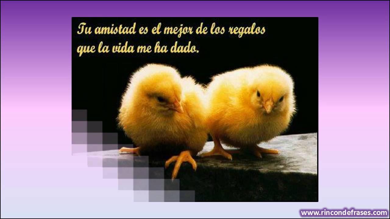 Frases De Amigos Para Foto: Frases De Amistad: Imagenes Con Las Mejores Frases De