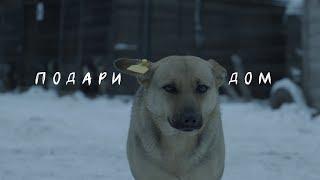 """""""ПОДАРИ ДОМ"""" Фильм про собачий приют."""