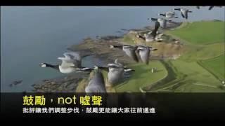 群雁飛行激勵故事