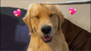 How to make Dog smile
