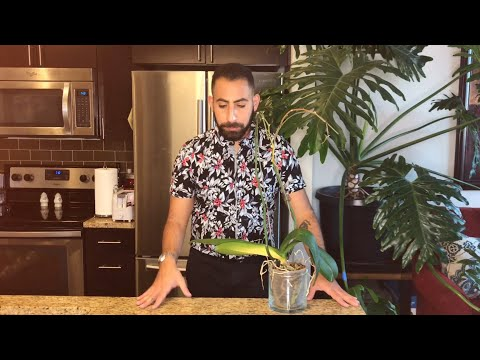 Converting Your Orchid: