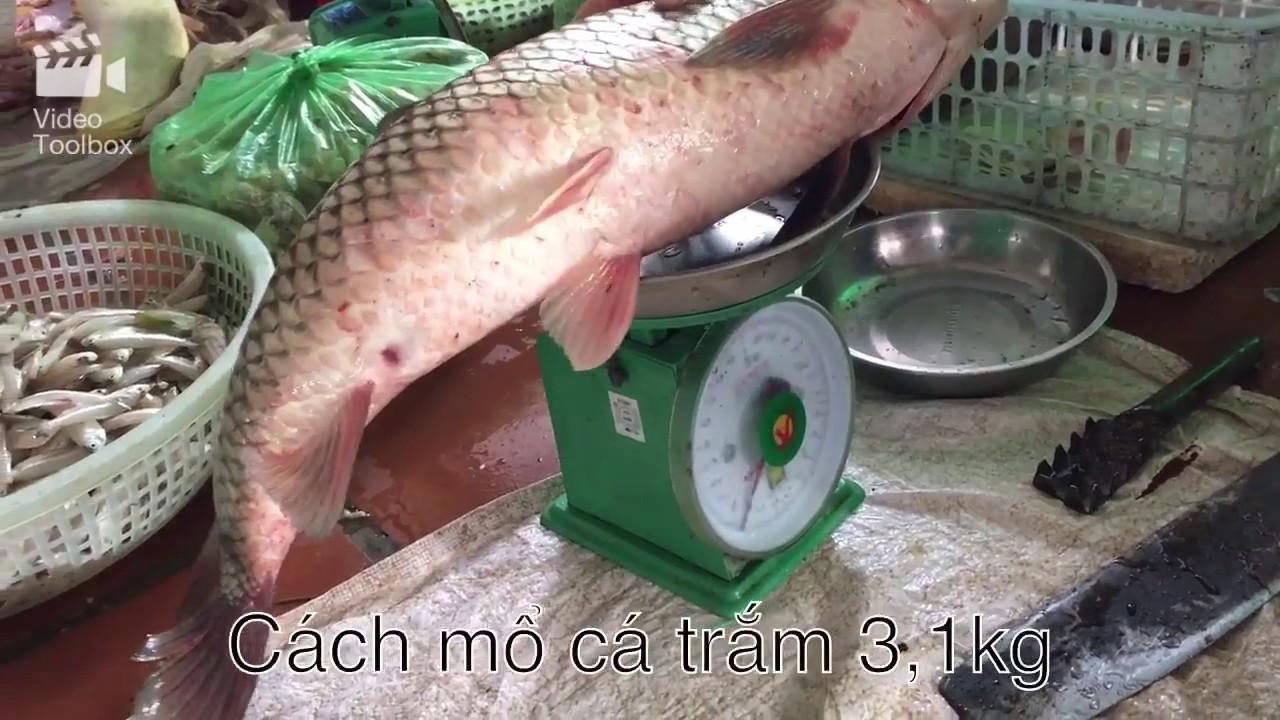Cách mổ cá Trắm 3,1kg đơn giản
