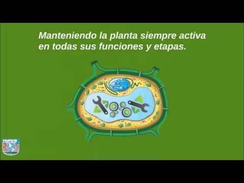 ¿Qué es el estrés en las plantas?
