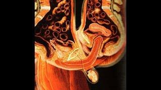 NEW Latest 3D Scanning Technology SEX INTERNAL Mechanics Medical VIDEO